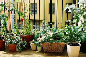 Προστασία των λουλουδιών από τα έντομα