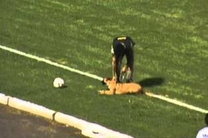 e0a768602a9 Αστυνομικός σκύλος χούλιγκαν – Newsbeast