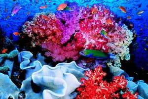 Σε σοβαρό κίνδυνο οι κοραλλιογενείς ύφαλοι της Καραϊβικής