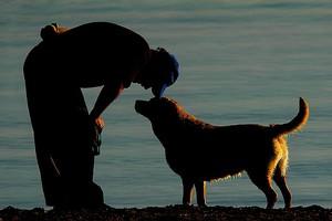 Aντιμετωπίστε το θάνατο του ζώου σας