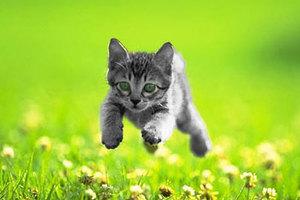 Θες γατάκι... πρώτα μάθε κάτι!
