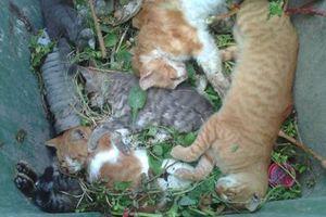 Δηλητηρίασαν δεκάδες γάτες στην Αριδαία
