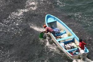 Εκατομμύρια ψάρια στις ακτές του Ακαπούλκο