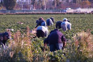 Αναζητείται νέο μοντέλο για την αγροτική παραγωγή