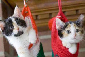 6fb04ceca06e Τα 10 συχνότερα προβλήματα συμπεριφοράς στις γάτες – Newsbeast