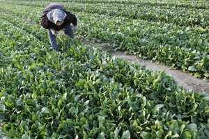 Νέες καλλιέργειες και παραδοσιακά προϊόντα στη Μεσσηνία