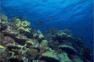 Τεχνητοί ύφαλοι σε θαλάσσια περιοχή της Πιερίας