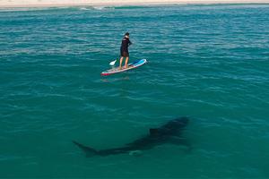 Καρχαρίας όρμησε πάνω σε σανίδα σέρφερ