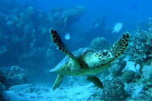 Θλιβερό ρεκόρ για τραυματισμένες χελώνες