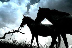 Ιός Δυτικού Νείλου: Κρούσματα σε άλογα σε Λάρισα και Ξάνθη