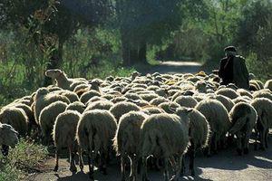 Διαφωνούν οι κτηνοτρόφοι με τον εθνικό φάκελο της νέας ΚΑΠ