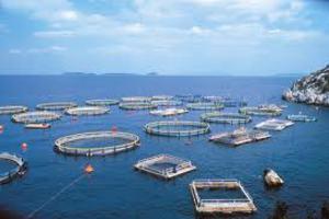 Απρόσκοπτη η εξαγωγή ψαριών υδατοκαλλιέργειας στη Ρωσία