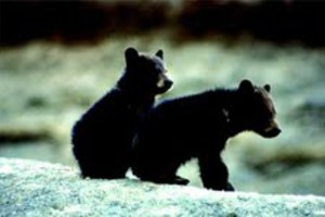 Με δίδυμα αρκουδάκια στο σπίτι του!