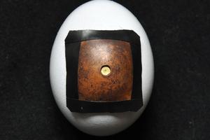 Φωτογραφική μηχανή από... αβγό