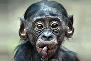 Πίθηκο θα στείλει το Ιράν στο διάστημα