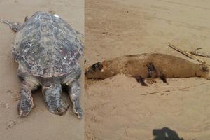 Νεκρά ζώα σε παραλία της Ηλείας