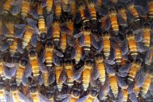 Νεκρός 55χρονος στην Ηλεία από επίθεση μελισσών