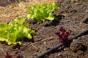 Φτιάξε το δικό σου λαχανόκηπο με τη στήριξη του ΑΠΘ