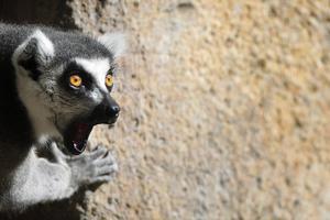 Από τη... «Μαδαγασκάρη» στο Σίδνεϊ