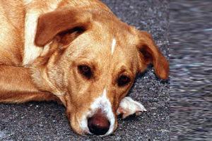 Αρρωστημένο μυαλό βασανίζει σκυλιά μέχρι θανάτου