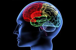 O εγκέφαλός μας έχει... GPS