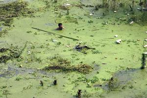 Εφτά συλλήψεις για το κάδμιο σε ποταμό της Κίνας