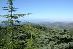 Βρέθηκε σπάνιο φυτό στο όρος Τρόοδος