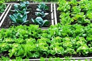 Συλλογικός λαχανόκηπος στην Κεντρική Μακεδονία