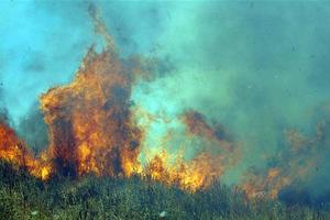 Πυρκαγιά στην Καρύνια Λακωνίας