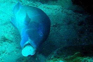 Φωτογραφίες από ένα ψάρι που δεν έχετε ξαναδεί