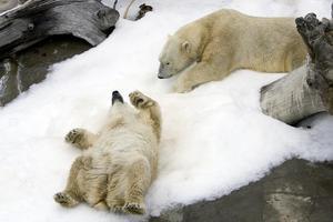 Δωρητές... χιονιού στο ζωολογικό κήπο