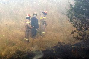 Υπό μερικό έλεγχο η φωτιά στη Λακωνία