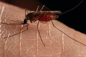 Ιός του Δυτικού Νείλου: Πέντε τα επιβεβαιωμένα κρούσματα λοίμωξης