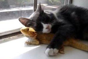 Όταν τα ζώα αγαπιούνται