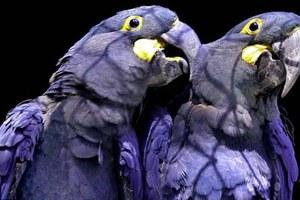 Ακόμα και τα πτηνά έχουν ανάγκη από έναν «μασέρ»