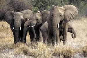 Οι μετεωρολόγοι του ζωικού βασιλείου