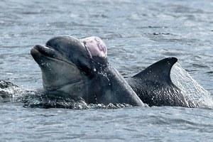 Δελφίνι «φόρεσε» μέδουσα για καπέλο