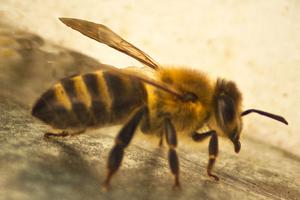 Μια μέλισσα προκάλεσε τροχαίο!
