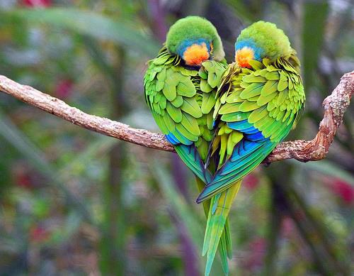 Τελικά έχουν γέλιο αυτά τα πουλιά