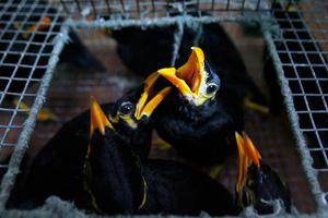 «Μπλόκο» στο λαθρεμπόριο ζώων
