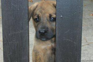 Σε δίκη ο βοσκός που έβγαλε τα μάτια του σκύλου του