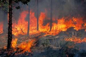 Σε εξέλιξη η πυρκαγιά στο Κατηχώρι Πηλίου