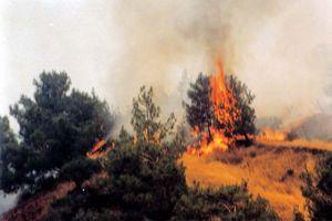 Έκτακτα μέτρα για την πρόληψη πυρκαγιών στη Σάμο
