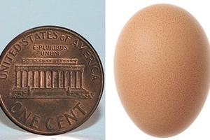 Βρήκε το πιο μικρό αυγό στον κόσμο;