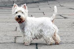 Χάθηκε σκυλίτσα στο Περιστέρι