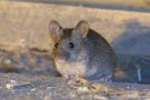 Ποντίκια σε σχολικό συγκρότημα στο Βόλο