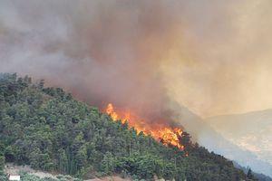 Πυρκαγιά σε δασική έκταση στη Λακωνία