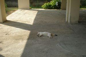 Αστυνομικοί έσωσαν δηλητηριασμένη γάτα στην Κρήτη