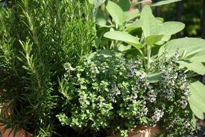 Προοπτικές ανάπτυξης στην καλλιέργεια αρωματικών φυτών