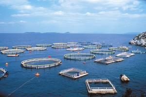 Η Ε.Ε. ενέκρινε την εξαγορά του Νηρέα και της Σελόντα από την Andromeda Seafood